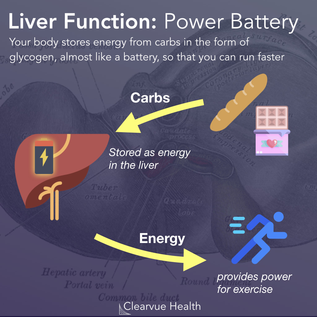 Glycogen: The Liver as a Battery