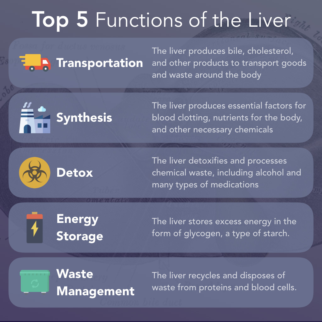 Top 5 Functions of the Liver