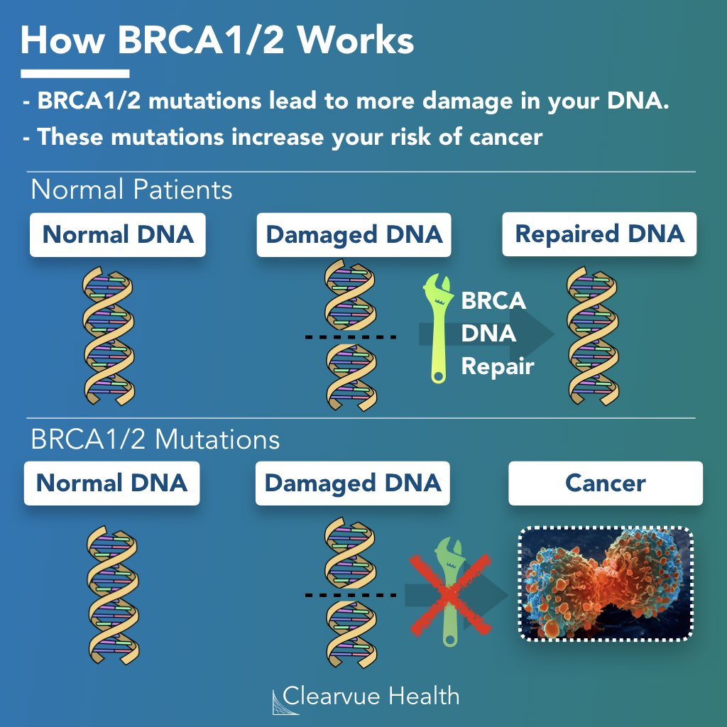 BRCA mechanism, how BRCA works