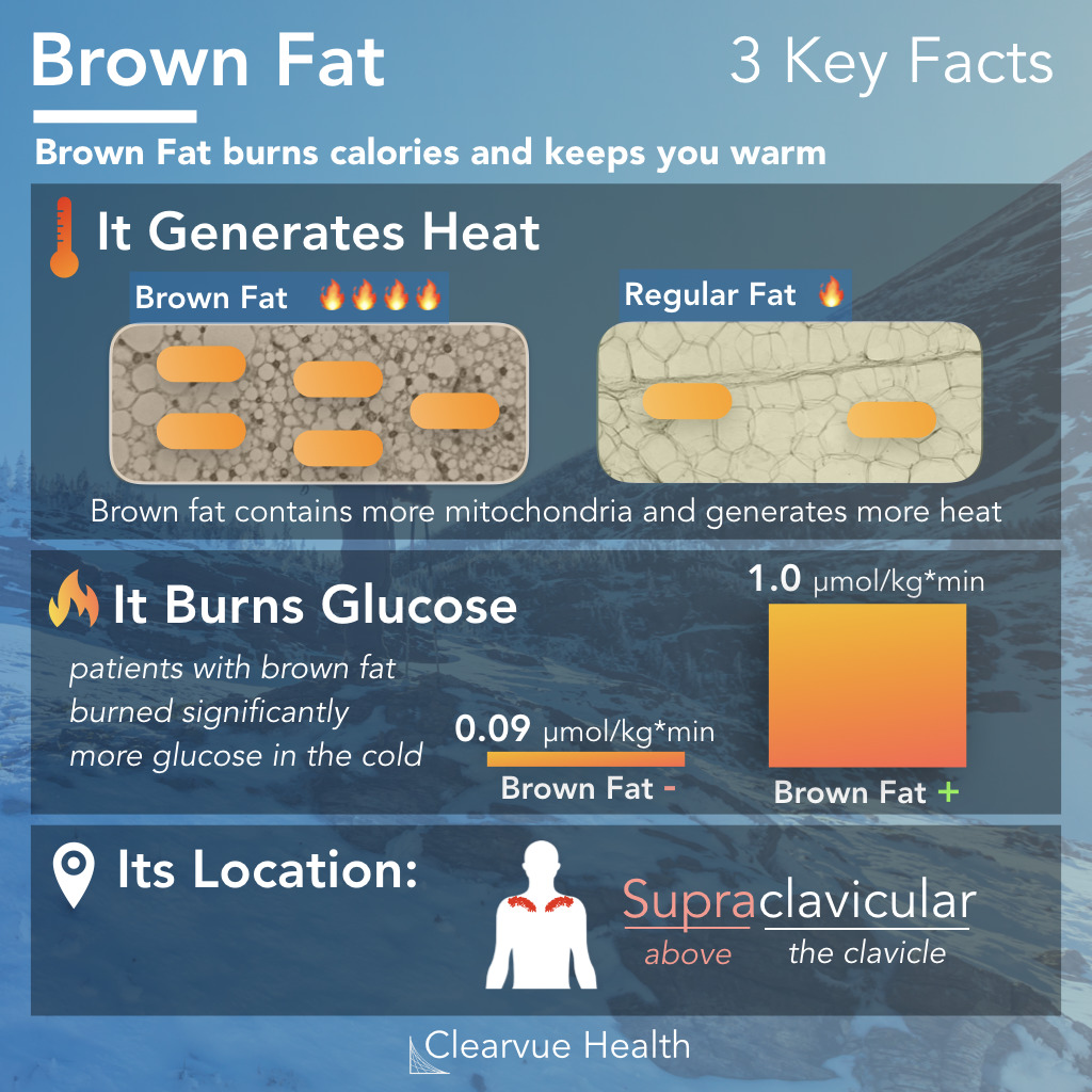 Brown Fat function and brown fat location