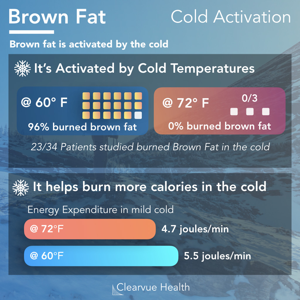 Brown Fat activity in the cold generates heat