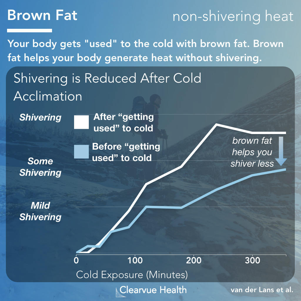 Brown Fat generates warmth without shivering