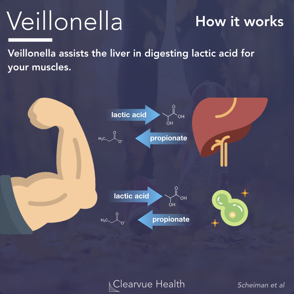 How Veillonella Works For Athletes