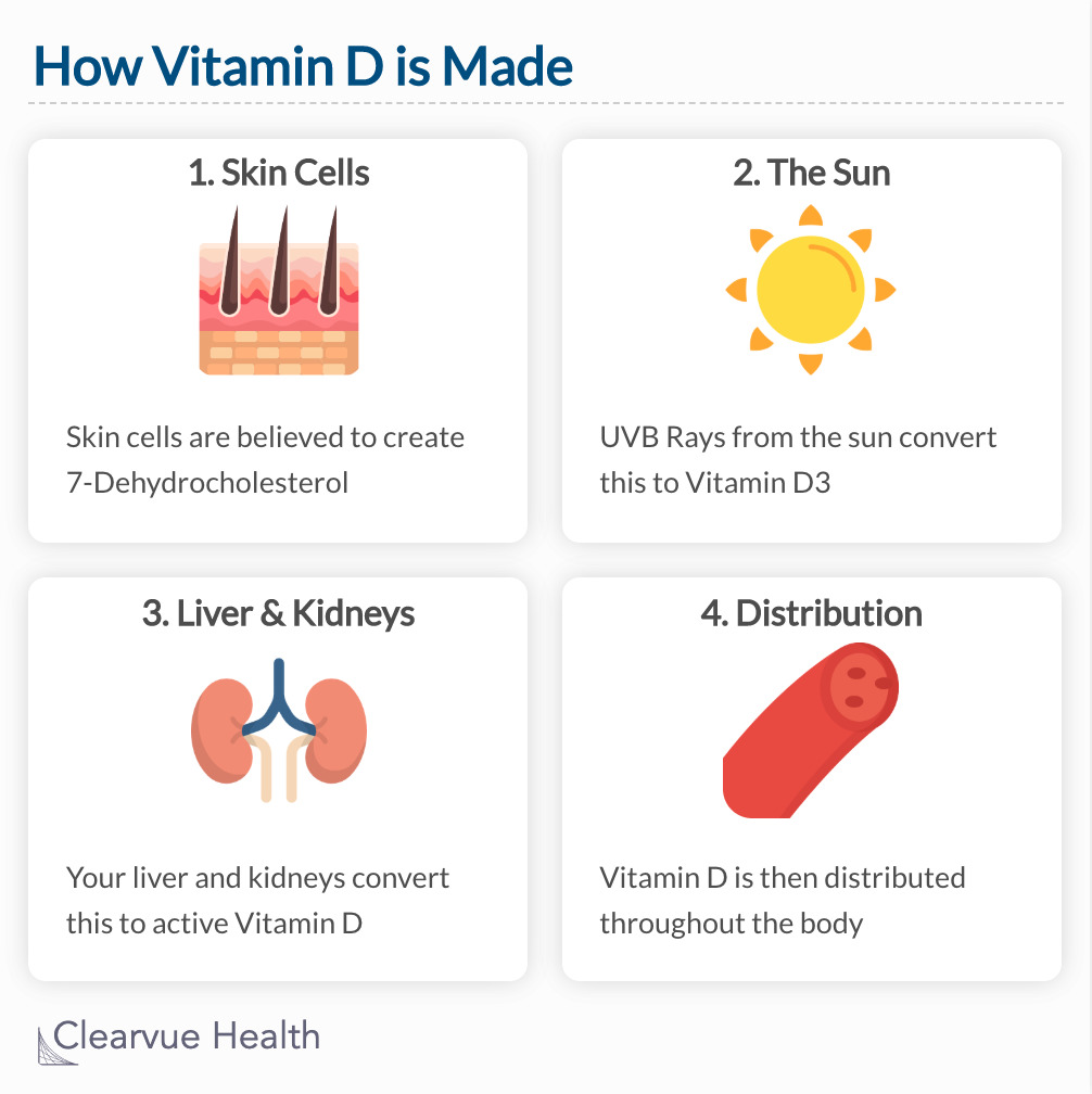 Chart of how vitamin D is made