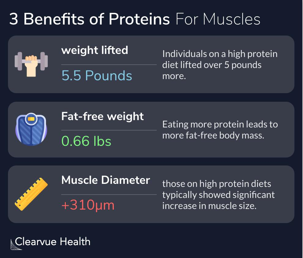 3 Benefits of Proteins for Muscles