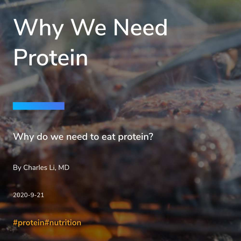 Why We Need Protein